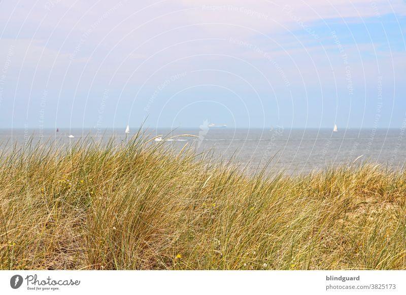 Ich könnte vor allem jetzt etwas Meer vertragen! Nordseeküste Belgien Strand Dünen Ebbe Flut Sommer Gras Dünengras Segel Segler Blau Gelb Grün Himmel Wolken