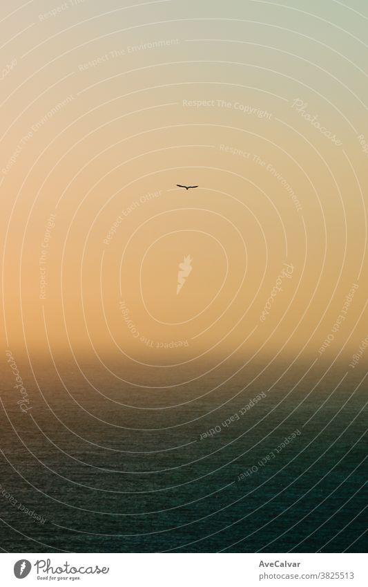 Einsame Möwe fliegt über den Horizont mit einem grünen Ozean darunter Meereslandschaft beleuchtet im Freien Sonne Sonnenlicht Natur Sonnenaufgang