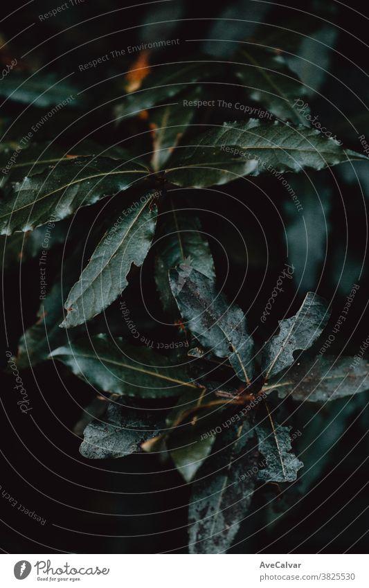Nahaufnahme einiger dunkel und grün getönter Blätter Pflanze Natur im Freien abschließen Wachstum Umwelt Frühling Baum niemand Farbbild pulsierend Sonnenlicht