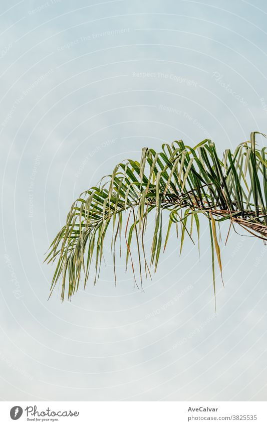 Eine einzelne Palme auf weißem Hintergrund Pflanze grün Natur im Freien abschließen Wachstum Umwelt Frühling Baum niemand Farbbild pulsierend Sonnenlicht