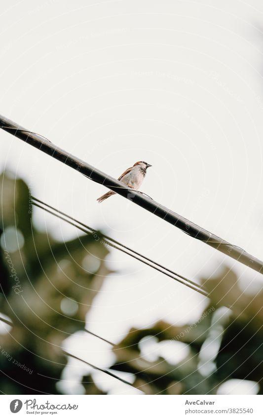 Ein Spatz über einem elektrischen Draht mit weißem Hintergrund Minimalismus Tier Linie hoch oben Air Flügel einfach Konzept Dekoration & Verzierung dramatisch