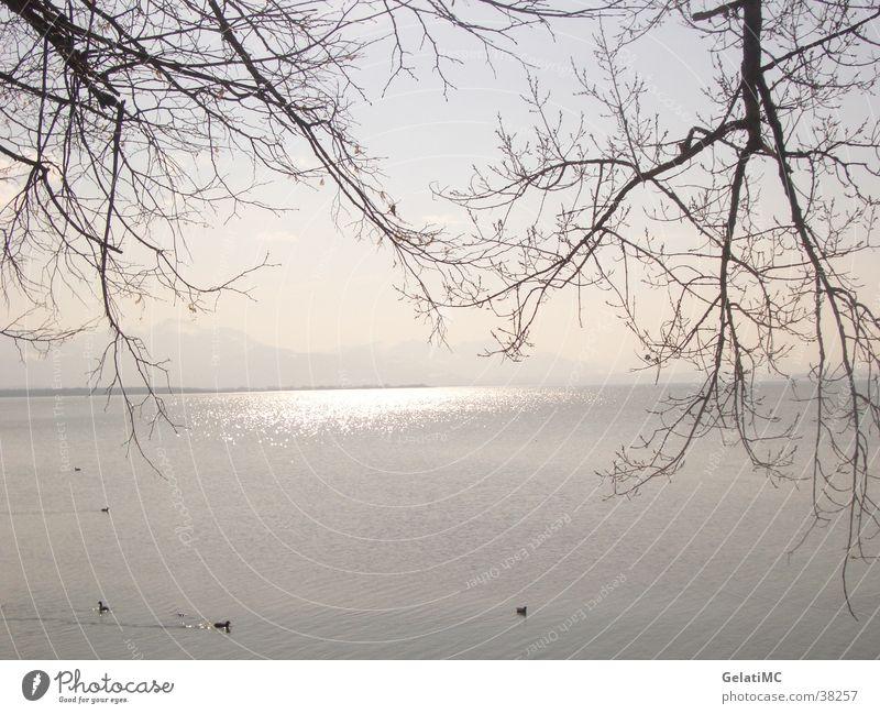 Chiemsee Herbst Reflexion & Spiegelung Panorama (Aussicht) Bayern Landschaft groß