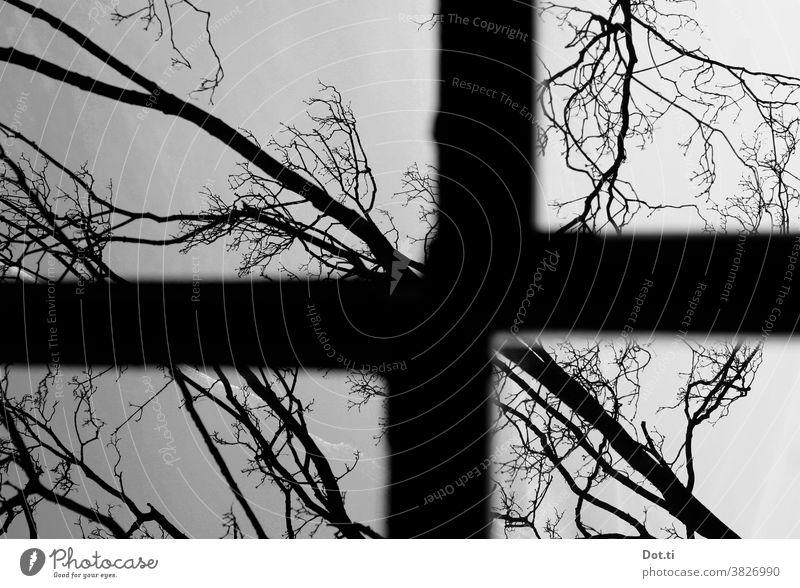 Fensterkreuz Rahmen Bäume Äste schräg Schwarzweißfoto Kontrast Aussicht kahle Bäume