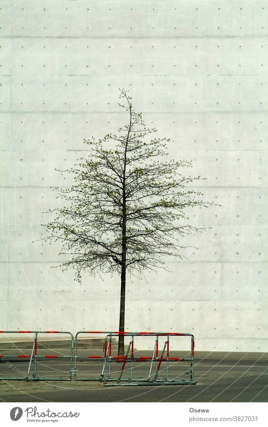 Stadtgrün mit Barriere Baum Wüste Baumstamm Baumkrone Mauer Wand Fassade Beton Sichtbeton Betonwüste grau Kontrast Zaun Absperrung Einfriedung Gebäude