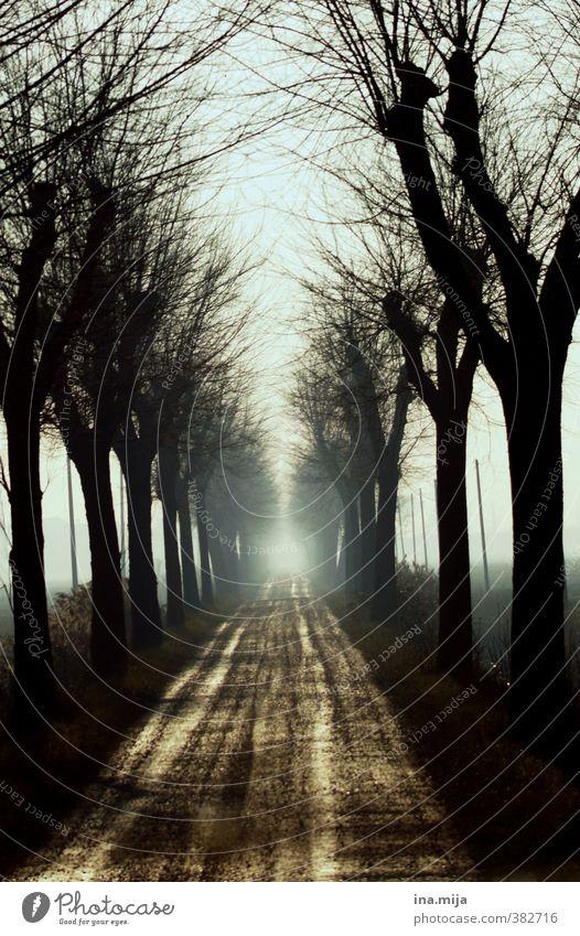 am ende ist das weiße licht... Natur Erholung Einsamkeit Landschaft ruhig Winter Wald Umwelt dunkel Tod Herbst Traurigkeit Frühling Wege & Pfade Sand Luft
