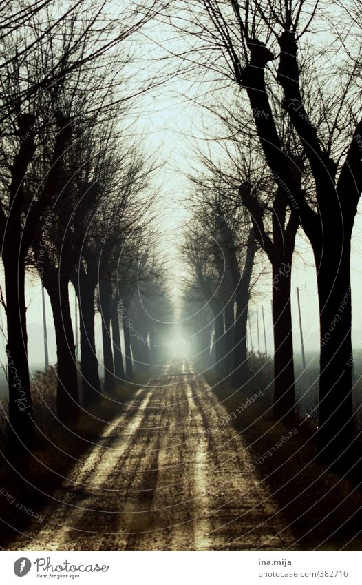 am ende ist das weiße licht... Umwelt Natur Landschaft Sand Luft Frühling Herbst Winter Wald selbstbewußt Kraft Angst Verzweiflung Allee Tod Licht Wege & Pfade