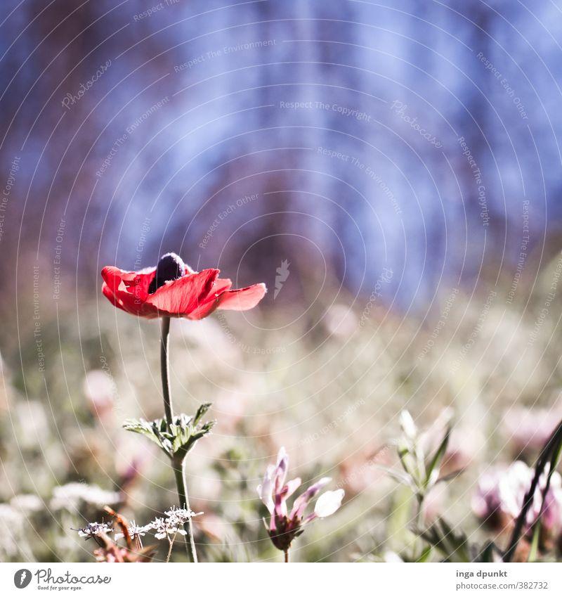 Anemone Natur schön Pflanze Landschaft Blume Wald Umwelt Frühling Blüte natürlich hell außergewöhnlich Stimmung Romantik Jahreszeiten Wildpflanze