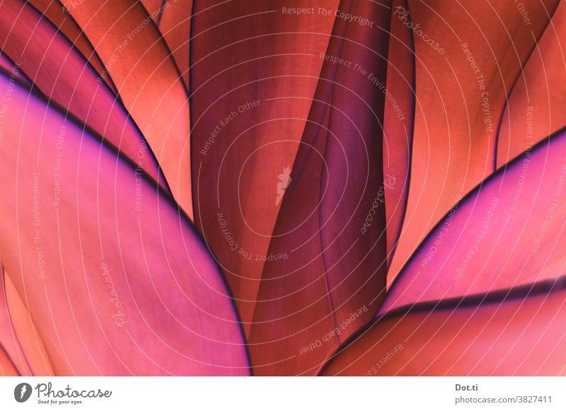leafy Agave Blätter Strukturen & Formen abstrakt pink orange schichten