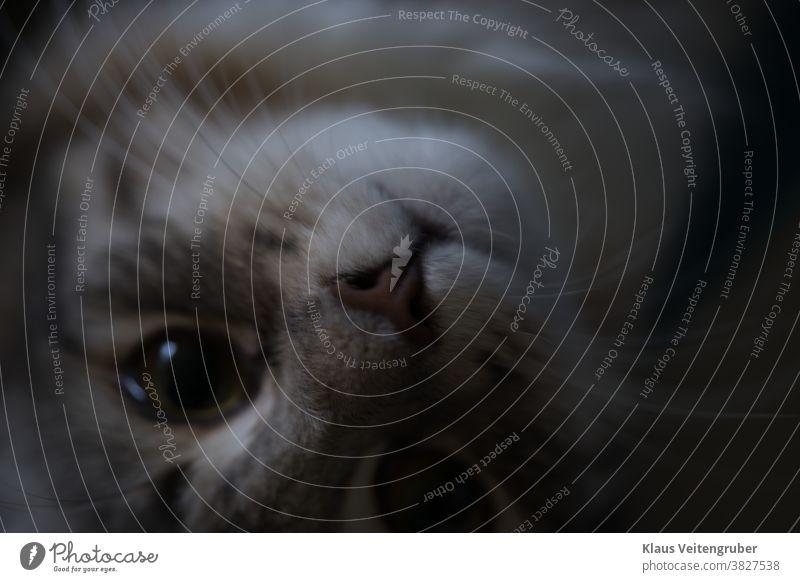 Katzengesicht Nahaufnahme, Katze liegt auf dem Rücken und beobachtet die Kamera. Auge Europäer europäische Katze Tigerkatze pelzig lieblich Hauskatze