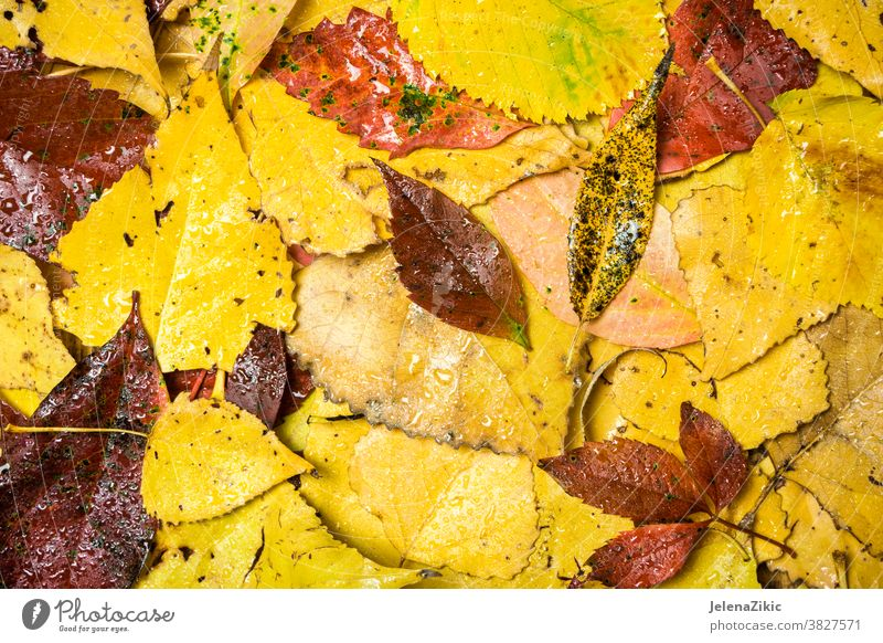 Farbenfroher Herbsthintergrund Blatt Natur fallen Rahmen gelb Hintergrund braun rot grün Saison Textur Design natürlich September Tapete niemand Pflanze