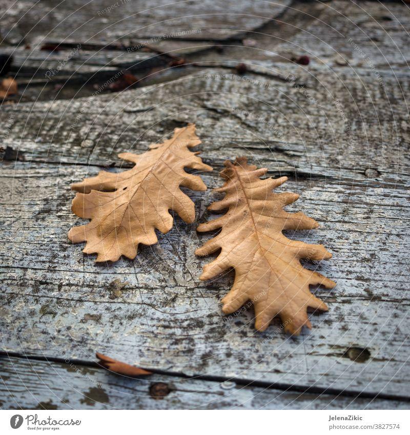 Herbstblätter auf Holzbrettchen natürlich Saison Blatt Hintergrund Muster Natur Textur Farbe Holzplatte fallen hölzern Ahorn alt abstrakt golden Oktober hell