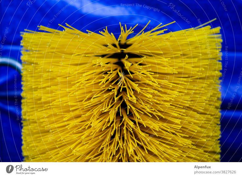 Bürstenanemone Borsten Sauberkeit Nahaufnahme Reinigen Detailaufnahme blau Farbfoto Menschenleer Reinlichkeit Bürstenwalze bürsten Kehren reinigend