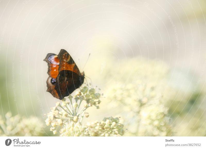 Schmetterling im Herbstgarten Falter Oktober Edelfalter Herbstbeginn Flügelmuster Herbstfoto Tagfalter Tagpfauenauge zartes Grün Hellgrün nah