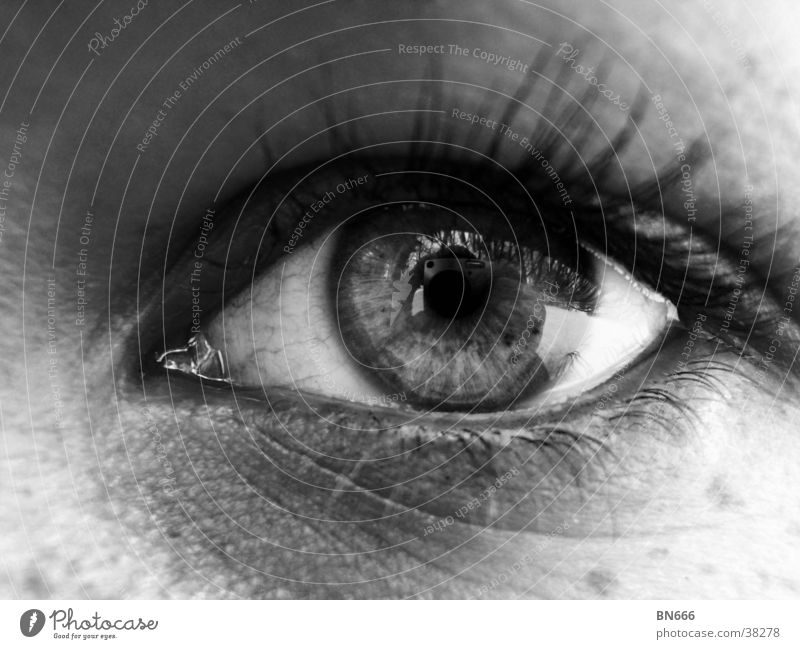 Das Auge! Frau Auge feminin Klarheit