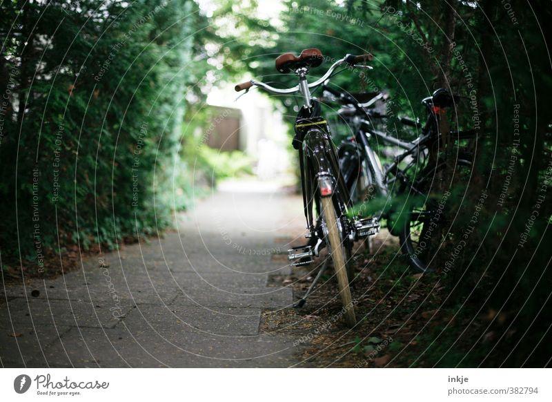 Pause Freizeit & Hobby Ferien & Urlaub & Reisen Ausflug Fahrradtour Sommer Fahrradfahren Natur Sträucher Wildpflanze Garten Park Menschenleer Wege & Pfade