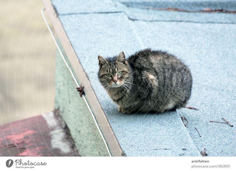 Prager Katze blau grün schön Tier Wand Mauer Stein rosa Zufriedenheit Perspektive Beton ästhetisch Abenteuer Dach Ecke