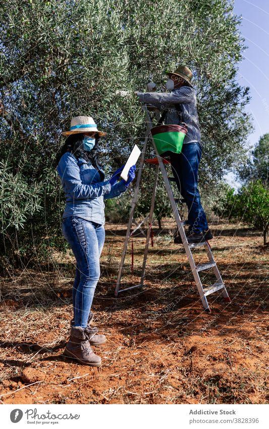 Landwirte bei der Arbeit in der Plantage während der Erntezeit Frau Mann Bauernhof Frucht Ackerbau benutzend Tablette Garten Gartenbau behüten Coronavirus COVID