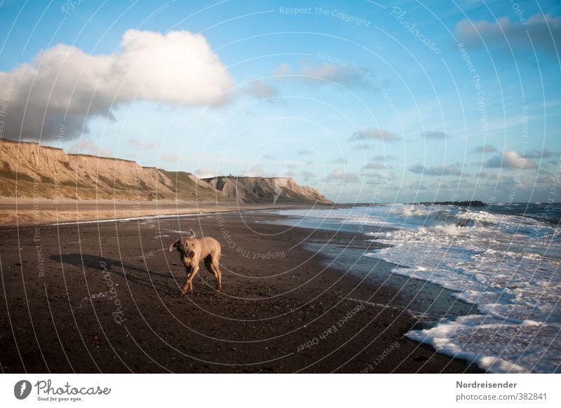 Seitenwind Abenteuer Freiheit Sommer Sommerurlaub Strand Wellen Natur Landschaft Himmel Wolken Schönes Wetter Wind Nordsee Meer Wege & Pfade Tier Hund Jagd