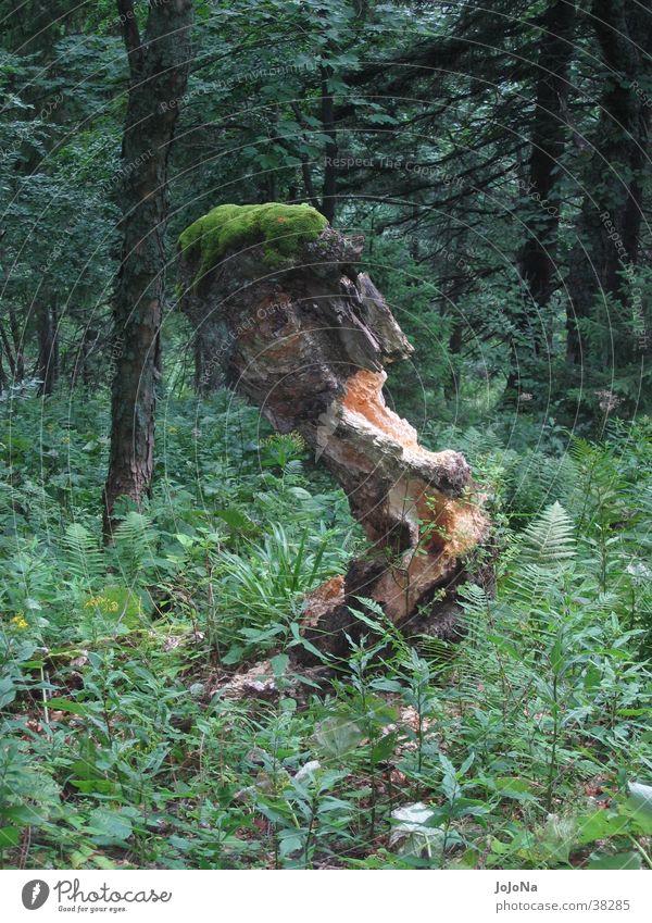 baumstumpf in der mala fatra grün Wald matt