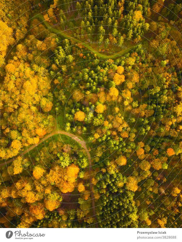 Luftaufnahme des Herbstwaldes in der Südsteiermark Grünes Herz von Österreich Wald Hintergrund Baum Wälder alpin Natur Ansicht von oben Blatt farbenfroh