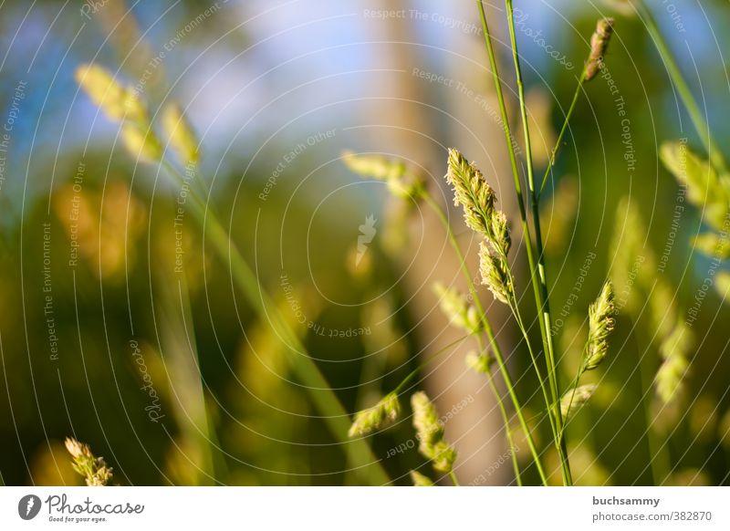 Sommerwiese Natur blau grün Pflanze Tier gelb Wiese Wärme Gras Hintergrundbild Park Feld Schönes Wetter frisch Jahreszeiten