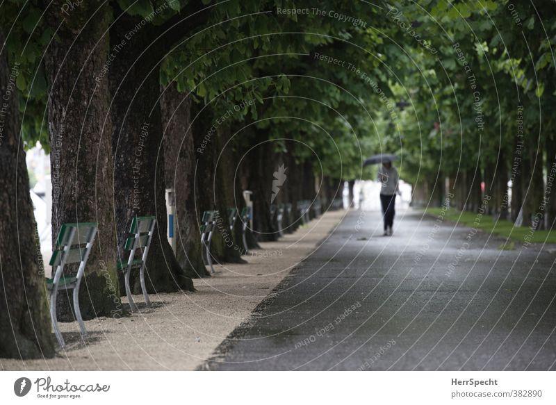 Regenallee Mensch Jugendliche grün Pflanze Baum Junge Frau Erwachsene dunkel 18-30 Jahre feminin grau braun Park Perspektive nass