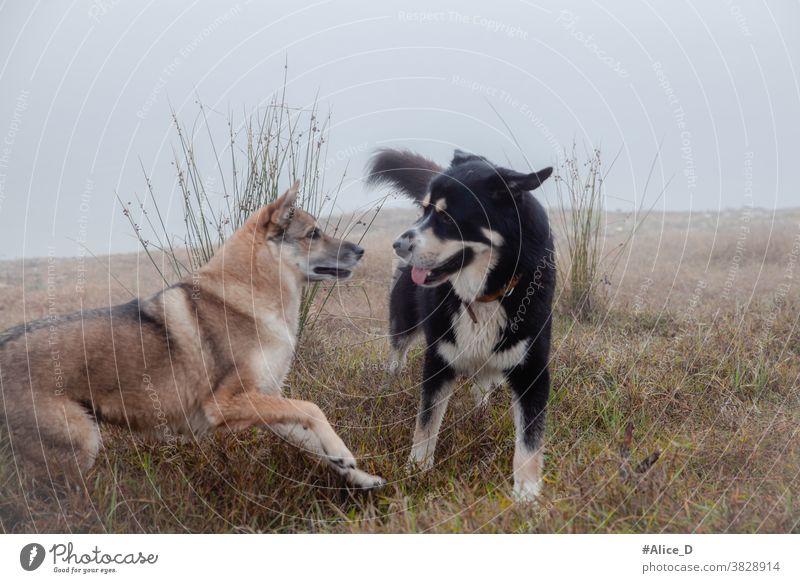 Hunde Begegnungen im Morgennebel Außenaufnahme Menschenleer Landschaft Halm Idylle Morgenlicht Tau Gras Wiese Wassertropfen draußen nass Grashalme Natur Frühtau