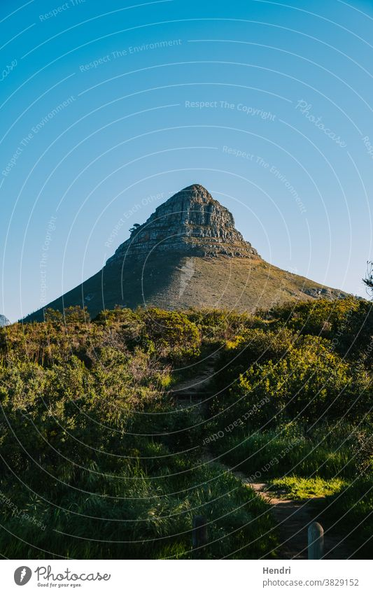 Berg mit schönem blauen Himmel und grünem Gras - Lion's Head Kapstadt Südafrika Nachlauf führend nach oben zu Berge u. Gebirge Löwen Der Löwe... Kopf