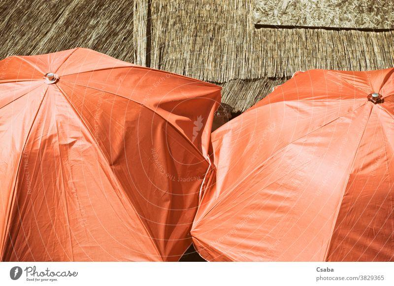 Hochwinkelansicht orangefarbener Schirme Regenschirm Sonnenschirm offen farbenfroh Objekt Nahaufnahme Farbe sonnig im Freien Schutz schützend Sommer farbig