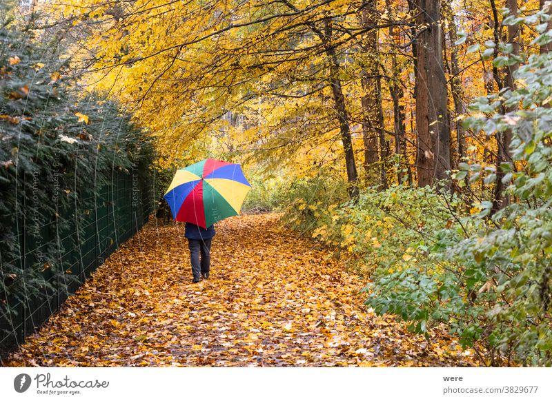 Person geht mit buntem Regenschirm im Wald unter herbstlichem Laub im Regen Herbst Erholung Spaziergang Herbstfarbe Herbstwald Herbstlaub schlechtes Wetter