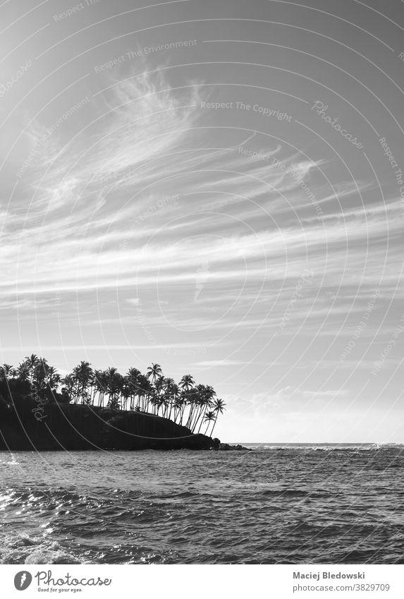 Schwarz-Weiß-Bild der tropischen Inselküste mit Palmensilhouetten bei Sonnenuntergang. MEER Natur schwarz auf weiß Sri Lanka Meer Handfläche Landschaft