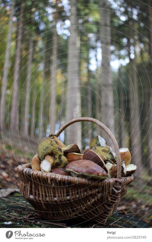 erfolgreiche Suche - Weidenkorb mit Pilzen steht auf dem Waldboden, im Hintergrund Bäume Maronenröhrling Korb Herbst Natur Farbfoto Außenaufnahme braun Umwelt