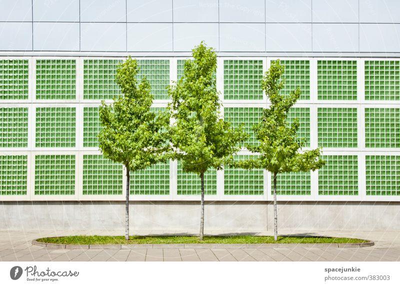 Green Trees Umwelt Natur Sommer Schönes Wetter Baum Gras Grünpflanze Stadtzentrum Menschenleer Haus Architektur Mauer Wand Fassade modern gelb grün Ordnung 3