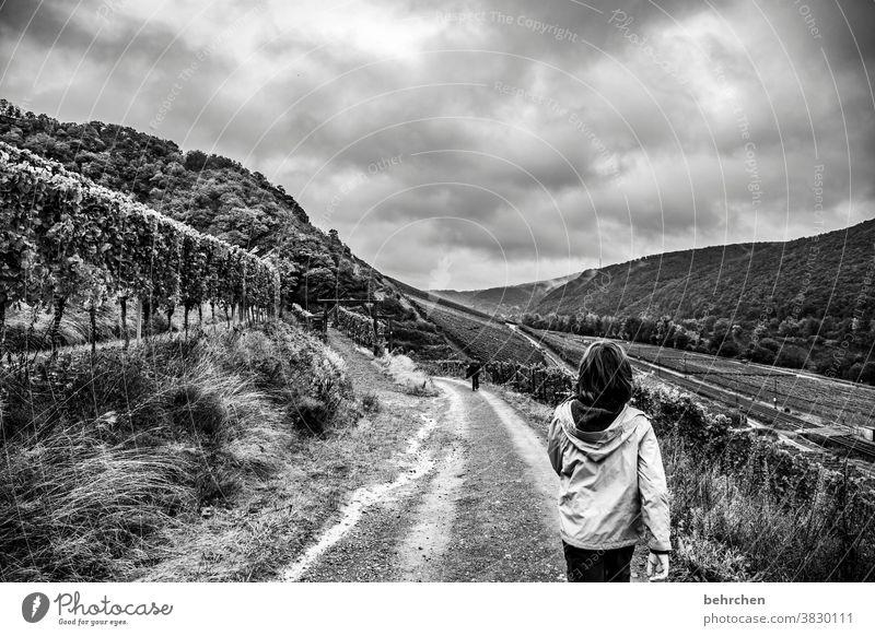 wandertag Weinberg herbstlich Jahreszeiten Herbst Regen Sohn Kindheit Wanderer Hunsrück Moseltal Mosel (Weinbaugebiet) Flussufer Rheinland-Pfalz Ruhe Idylle