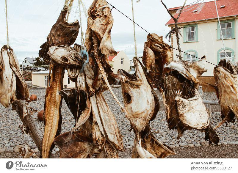 Getrocknete Fischköpfe Fischkopf getrockneter Fisch Totes Tier Tag Ernährung Lebensmittel Tod Detailaufnahme Farbfoto Fischmarkt Leine Häuser Haus Island Angeln