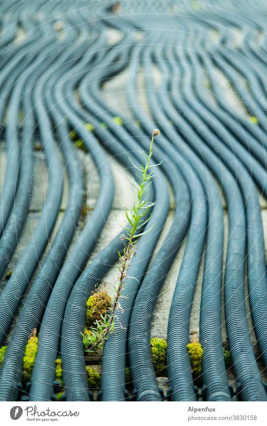 Verkehrsinsel Durchsetzungsvermögen Spross Außenaufnahme Farbfoto Pflanze Kraft Tag Menschenleer Natur Wachstum Umwelt Klima Alternative Energie nachhaltig