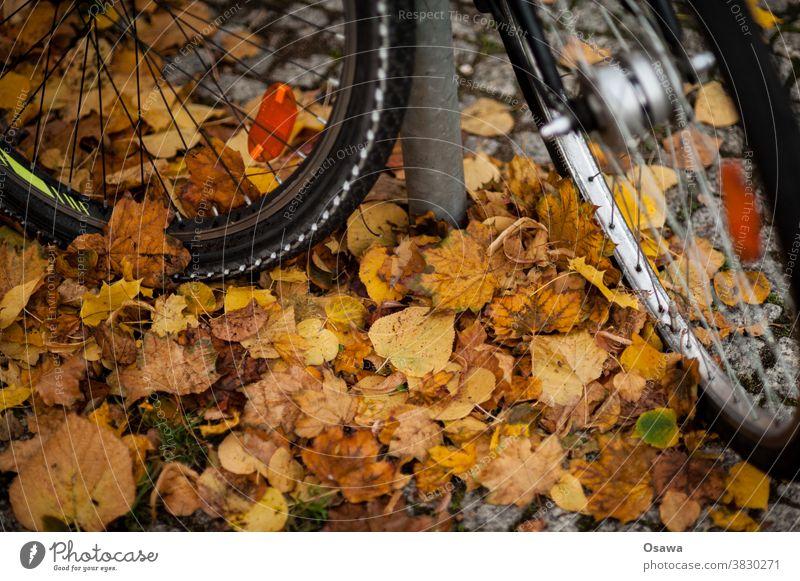 Fahrräder an Herbstlaub Fahrrad Rad Reifen Fahrradreifen Vorderreifen Speichen Felge Nabe Reflektor Laub Radeln Fahrradfahren Glatt Rutschig Gefahr Sturz Parken