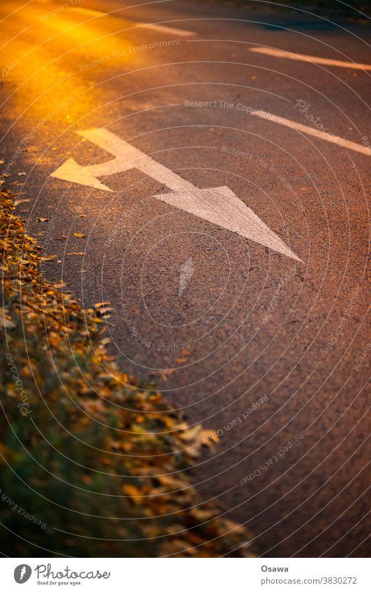 Richtungspfeil auf Asphalt Straße Markierung fahrbahnmarkierung wegweiser Pfeil abbiegen geradeaus Laub Straßenrand Abendlicht zeichen rechts orientierung