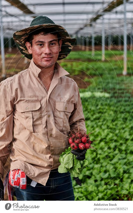 Lächelnder Bauer mit reifem Rettich auf dem Bauernhof Gemüse Landwirt Mann Arbeiter Freude Haufen frisch lecker männlich Gewächshaus Pflanze Ackerbau organisch