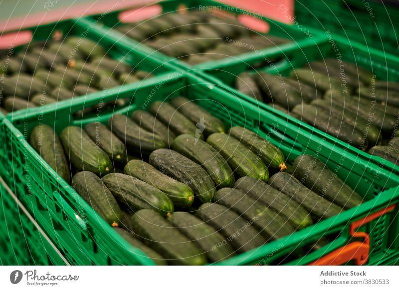 Frische Salatgurken in Plastikbehältern Kunststoff Container Gemüse Bauernhof Paket Ackerbau organisch Ernte Lebensmittel Einrichtung geschmackvoll reif Reihe