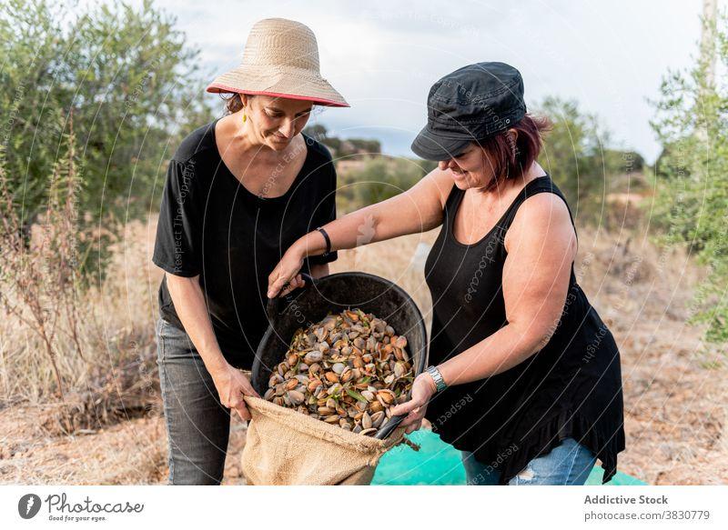 Frauen pflücken Nüsse im Ackerland Nut Landwirt setzen Eimer Tasche ineinander greifen Landschaft abholen Garner Beruf Ineinandergreifen Netz Ernte Arbeit
