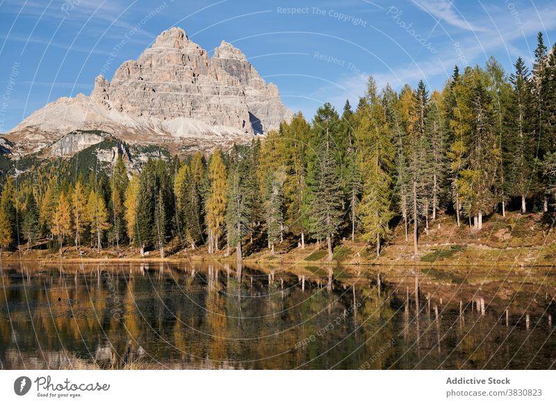 See im Wald gegen Bergspitze im Sommer nadelhaltig Berge u. Gebirge Ambitus Gipfel Hochland sonnig Landschaft die Dolomiten Italien Windstille Wasser ruhig
