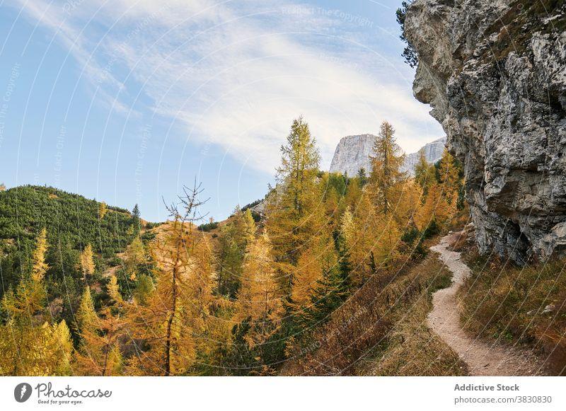 Trail in den Bergen in der Nähe von Herbst Wald die Dolomiten Berge u. Gebirge Ambitus Nachlauf Hochland Wälder fallen Natur Italien Baum Hügel malerisch