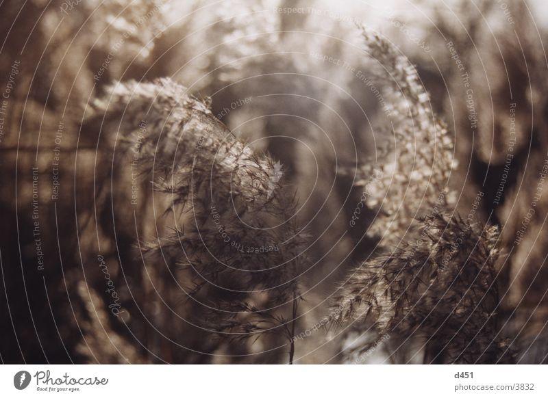 im wind Gras Blüte Gegenlicht Herbst Wind Bewegung