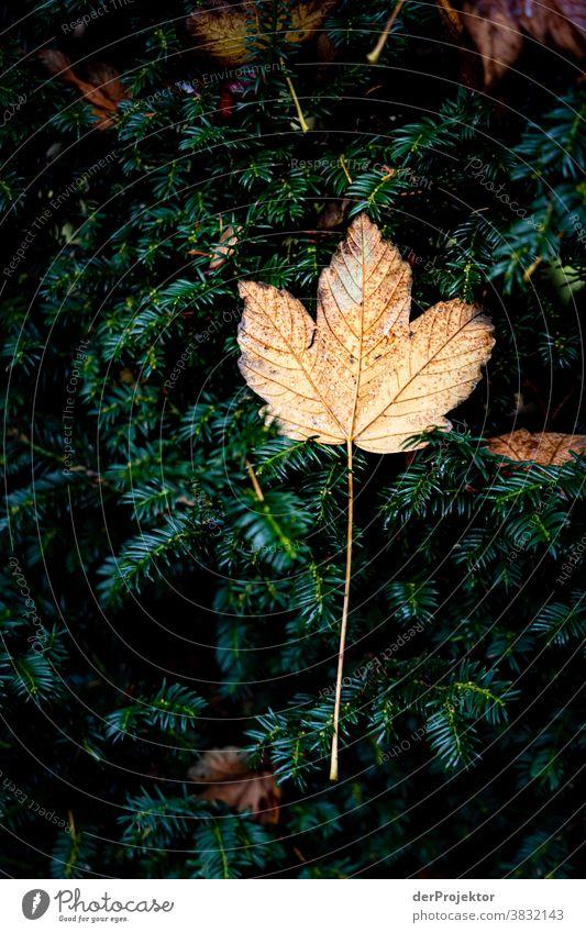 Ein einzelnes Blatt im Herbst in Niedersachsen Starke Tiefenschärfe Sonnenstrahlen Sonnenlicht Kontrast Schatten Tag Licht Textfreiraum unten Textfreiraum links