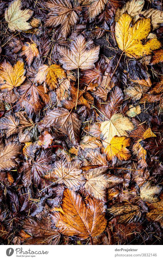 Blättermatsche im Herbst in Niedersachsen Starke Tiefenschärfe Sonnenstrahlen Sonnenlicht Kontrast Schatten Tag Licht Textfreiraum unten Textfreiraum links