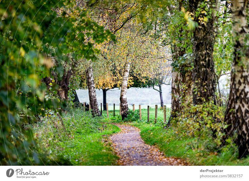 Weg am Feldrand im Herbst Landschaft Ausflug Natur Wanderung Umwelt wandern Pflanze Baum Wald Akzeptanz Vertrauen Glaube Naturerlebnis herbstlich Herbstfärbung