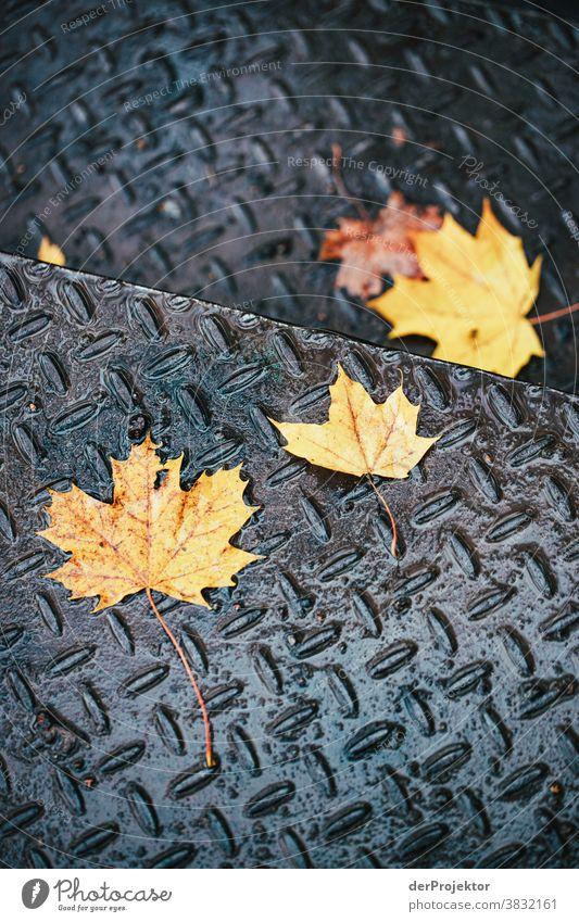 Blätter auf einer Treppe im Herbst in Berlin Starke Tiefenschärfe Sonnenstrahlen Sonnenlicht Kontrast Schatten Tag Licht Textfreiraum unten Textfreiraum links