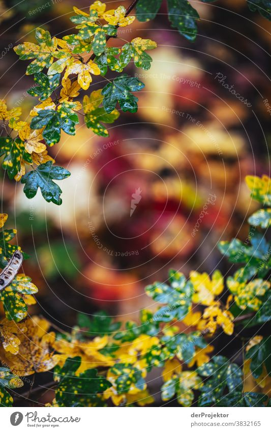 Herbst in Berlin Starke Tiefenschärfe Sonnenstrahlen Sonnenlicht Kontrast Schatten Tag Licht Textfreiraum unten Textfreiraum links Textfreiraum rechts