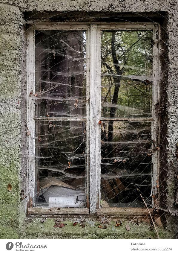Hier wurden schon lange keine Fenster geputzt. Sehr lange - oder das Fenster eines Lost Place ist mit vielen Spinnennetzen überzogen. Trotzdem spiegelt sich noch ein Baum in der Scheibe.